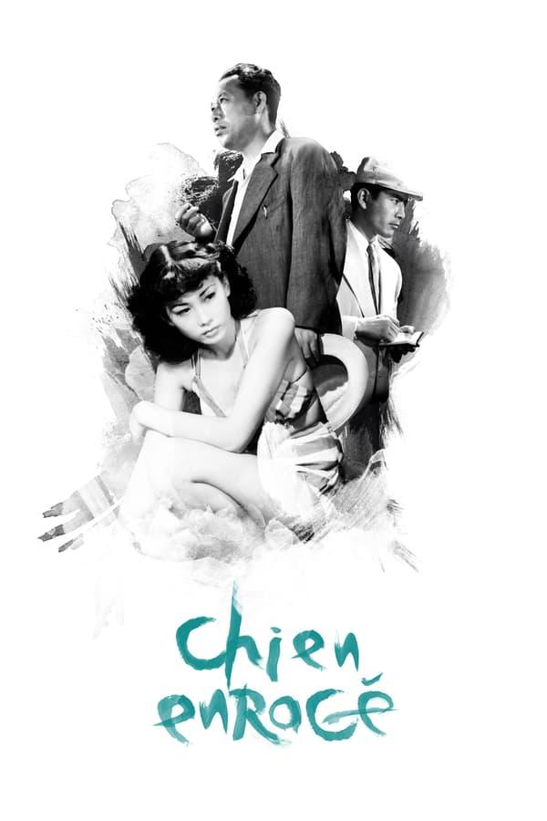 Read more about the article Chronique audio #5: Chien enragé